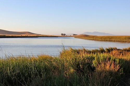 northerncalifornia suisuncity solanocounty suisunmarsh peytoniasloughecologicalreserve