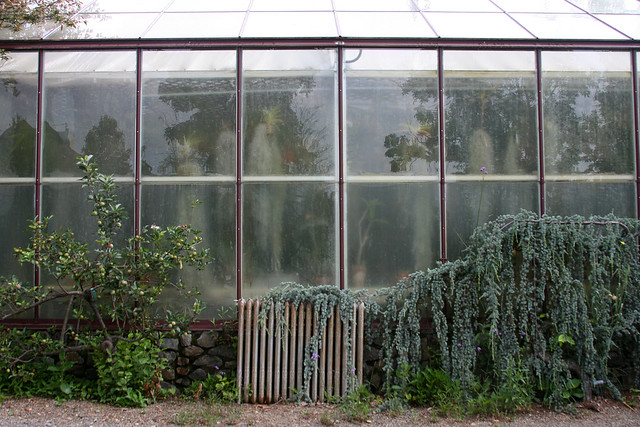 14_greenhouse_ghosts