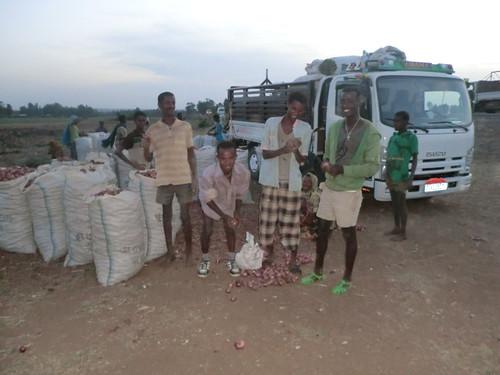 Onion from Koga irrigation scheme prepared for distant market through the mobile phone service (Photo:ILRI Yigzaw Dessalegne)