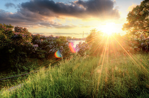flowers trees sunset sun sunlight nature water grass clouds landscape sweden stockholm path lensflare sverige railing bushes grönalund hdr sunbeams djurgården waldemarsudde