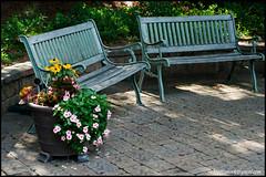 rikenon50 benches