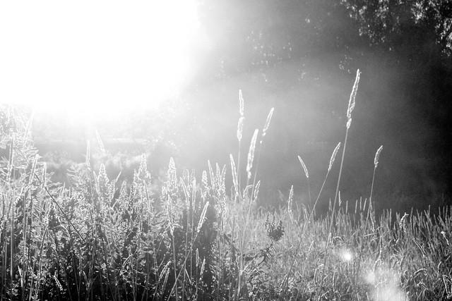 sunshinebw