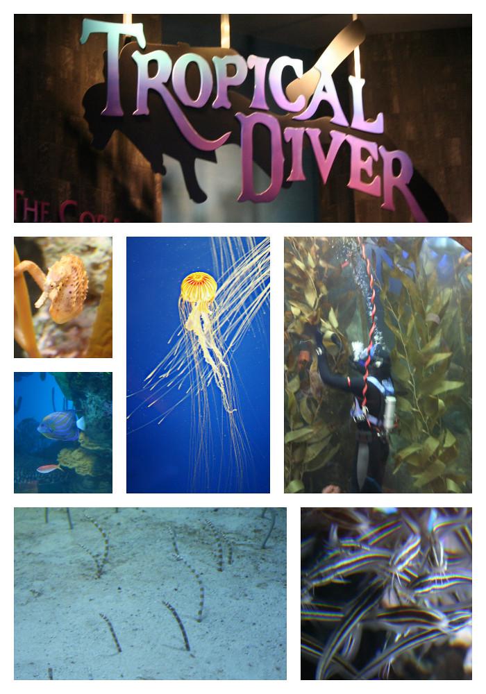 Tropical Diver