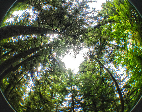 Fisheye trees Washington Cascades 2014 iphone_0615