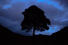 Sycamore Gap, at twilight