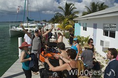 WildQuest Dolphin Swim - 15/2014