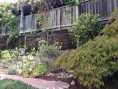 Vincente garden