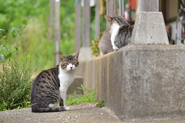 夏の青春18きっぷの旅 大洗編 2014年8月9日