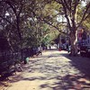 Today's view of stroll Morningside Park in Harlem!