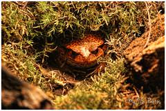 A very suspicious frog