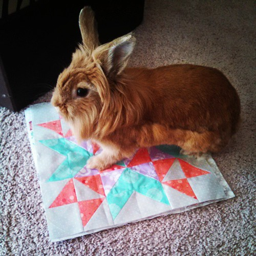 Clara inspects my #sewpiecefulbee blocks #littlebunnyquilts