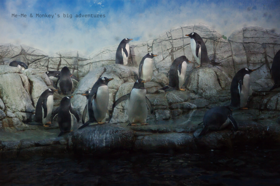 zoo blog 2 2
