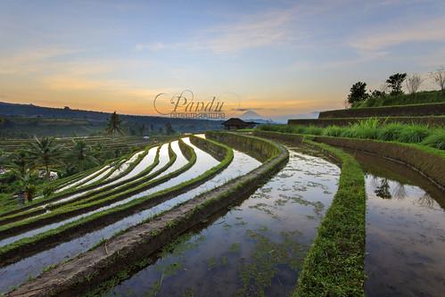 bali field sunrise indonesia photography tour rice guide jatiluwih baliphotography balitravelphotography baliphotographytour baliphotographyguide