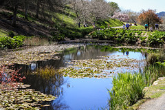 mt lofty gardens-4265