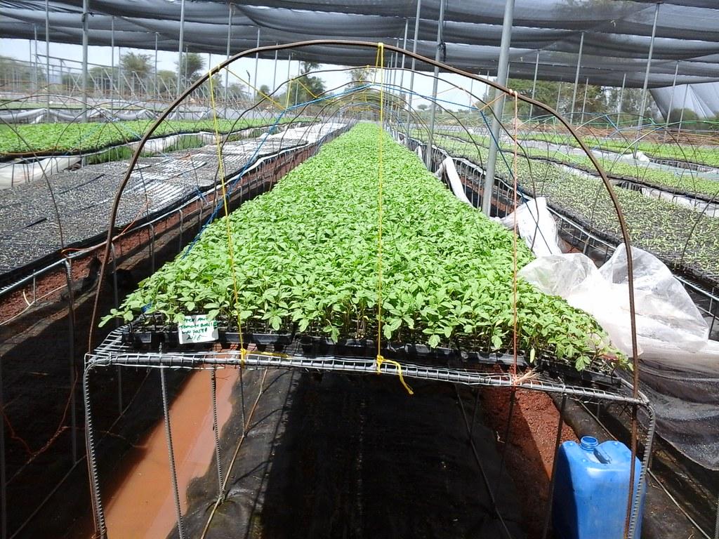 Seedling management by Florensis Ethiopia PLC (Photo:ILRI\Amenti Chali)