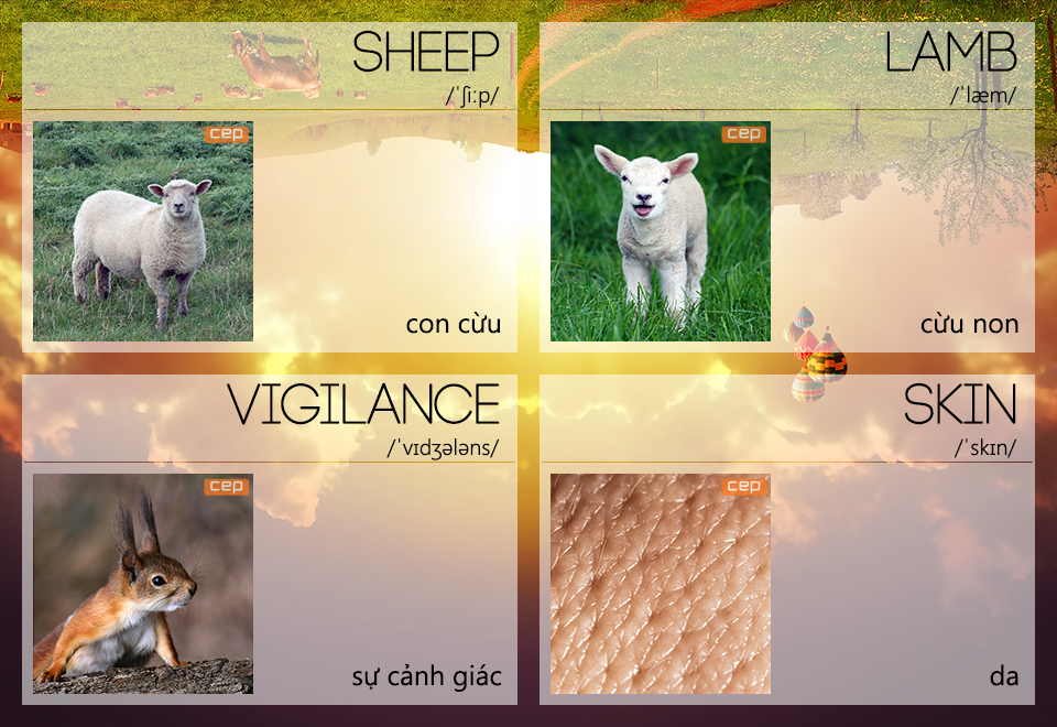 Con sói đội lốt cừu