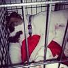 I miss her when she sleeps. #cratetraining #ilovemymutt #adoptadog #birddog #dogsofinstagram