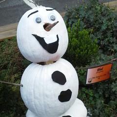 Its Olaf!