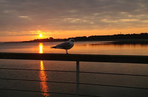beach strand sunrise möwe timmendorf elke körner sonnanaufgang pentaxk7 körnchen59