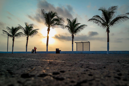 sunrise work mexico trabajo amanecer palmtree basura veracruz palmera