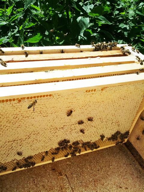 Honigraum