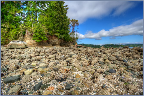wild detail beach nature canon landscape eos marine scenery wideangle 7d barnacles pugetsound washingtonstate hdr rockybeach puget lakebay lowperspective rockyshores piercecounty photomatix caseinlet washingtonstateparks penrosepoint keypeninsula penrosepointstatepark homewa eos7d dtwpuck scottsmithson scottelliottsmithson