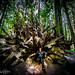 The king of the redwoods on his throne by tibchris