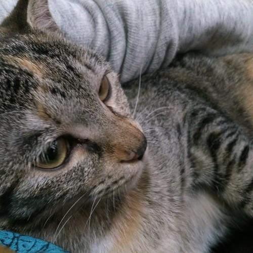 寒いのか、カトルは抱っこ by Chinobu