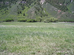 Looking up upper pasture