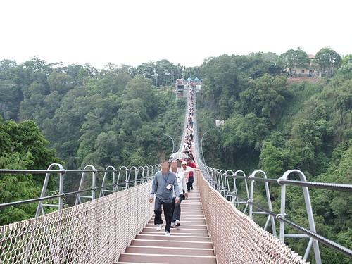 南投天空之橋、微光森林、微熱山丘4