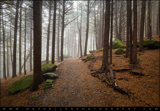 Appalachian Trail Landscape Photography in Western North Carolina
