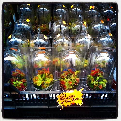 Piante carnivore al mercato dei fiori