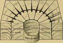 "Image from page 457 of ""The Quarterly journal of the Geological Society of London"" (1845)"