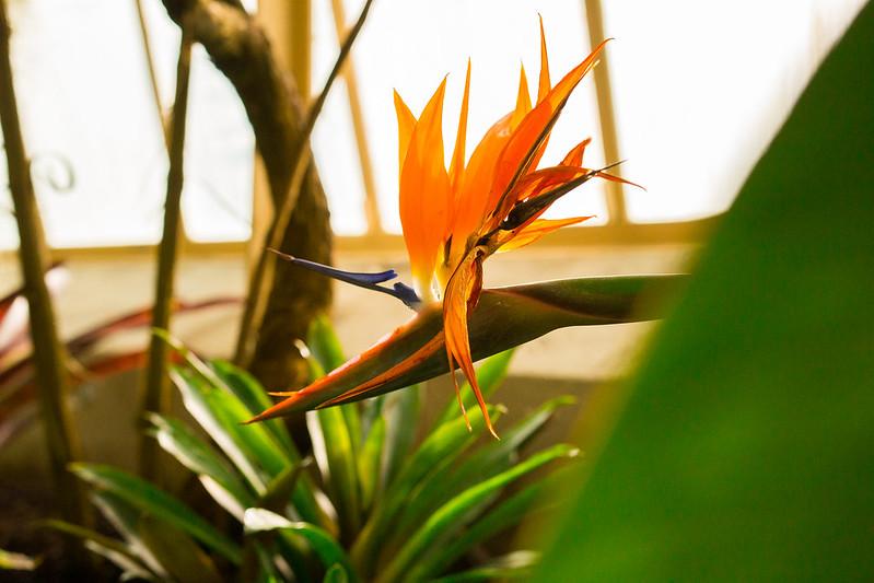 Botanical Conservatory_23