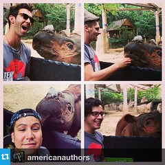 @americanauthors you guys look great in those shirts! #Repost from @americanauthors ---Harapan the Sumatran #rhino. The rarest rhino in the world. We teamed up with #TEAMRHINO, to let you and the world know about how badass these creatures are. Special th