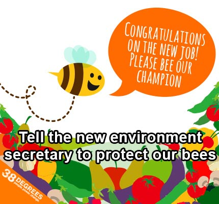 Bees: Tell the new environment secretary to protect them