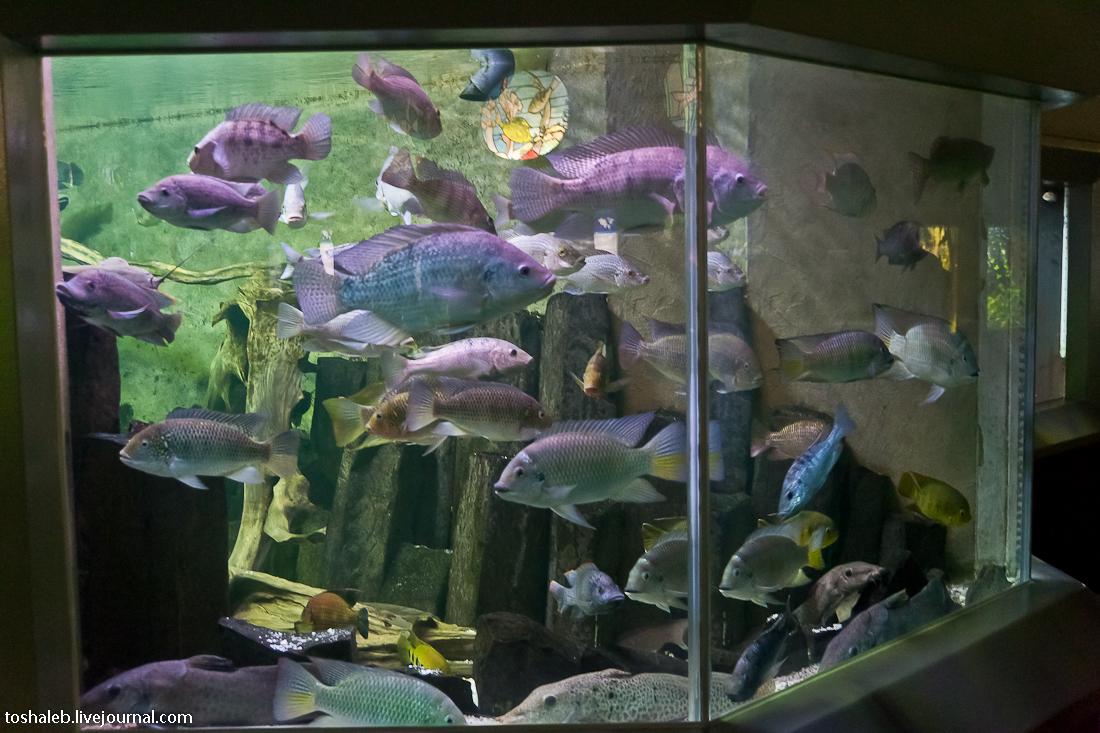 Берлин_аквариум-13
