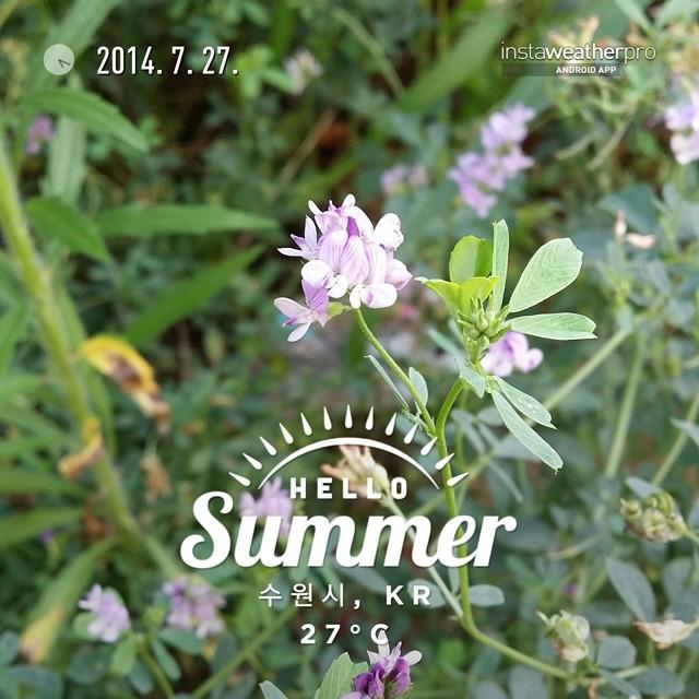Instaweather 제공 사진  Free App! @instaweatherpro #instaweather #instaweatherpro #weather #wx #android  #수원시 #대한민국 #day #summer #clouds #evening #kr  몇일 비만 오더니...오늘은 엄청 덥네~~