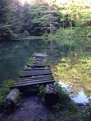 Monk's Pond sunken dock - Kripalu - august 2014