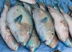 mackerel(0.0), trout(0.0), cod(0.0), fishing(0.0), forage fish(0.0), recreational fishing(0.0), red snapper(0.0), tilefish(0.0), bonito(0.0), sardine(0.0), milkfish(0.0), animal(1.0), fish(1.0), fish(1.0), seafood(1.0), oily fish(1.0), food(1.0),