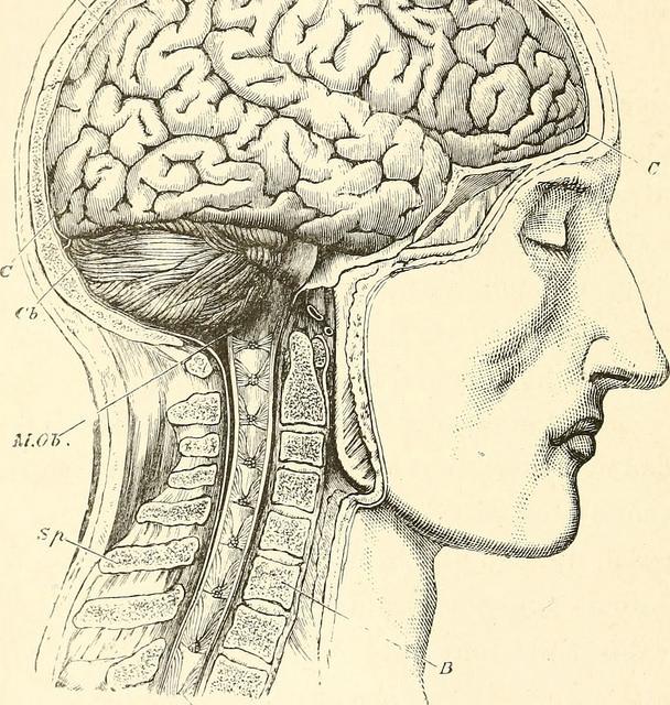 braintime