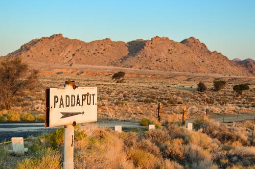 Paddaput