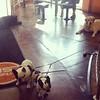 Gotta love a dog friendly gym