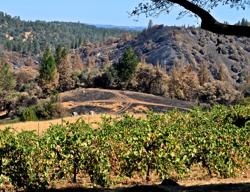 Shenandoah Valley Amador County California Tripcarta