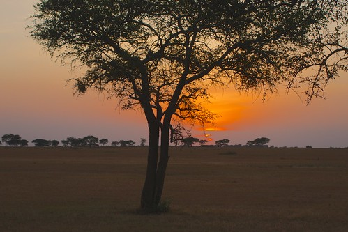 African safari, Aug 2014 - 061