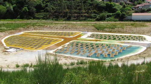 葡萄牙的植物除污(phytoremediation)計畫。(來源:Daniela)
