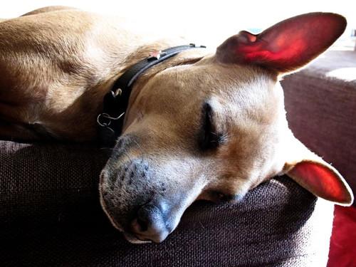slpngdog-0810