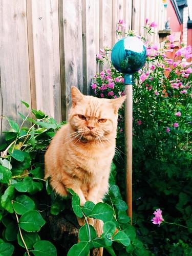 the garden guardian II
