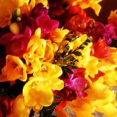 Fresias del 10 de Septiembre  #flores #fresias #primavera #unykaphoto