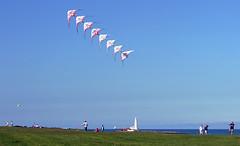 DSC_8532_Kites and St Mary's Island